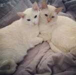 Seus gatinhos merecem todos os cuidados no conforto da sua casa!