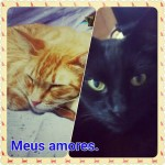 Meus amores anuncio 11 01 2016